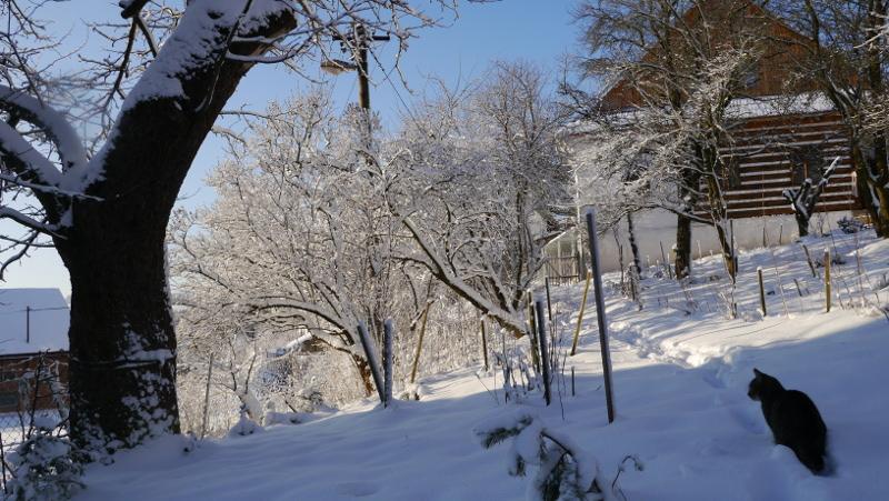 Kocourek Méďa, nebo Béďa?, u prastaré jabloně ...i on se raduje ze sněhu...
